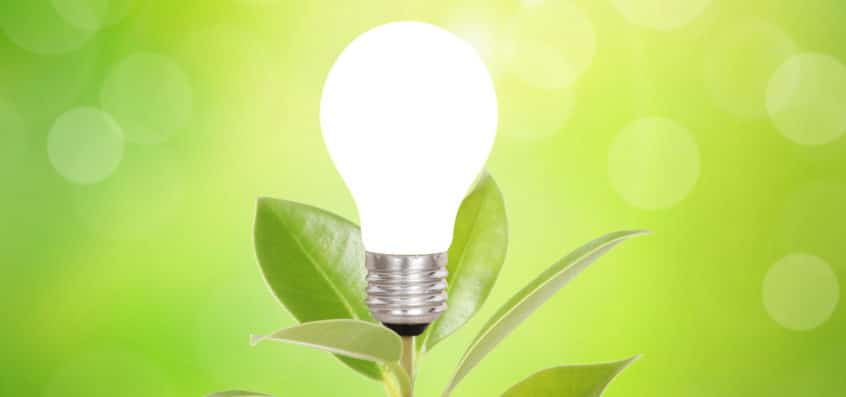 A bulb on a plant on green background as symbol for green energy