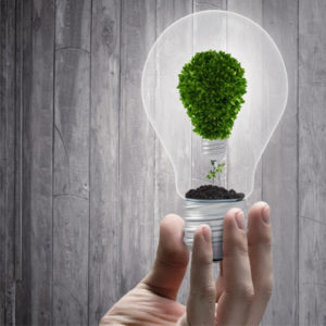 A bulb with a tree in it as a symbol for renewable energy
